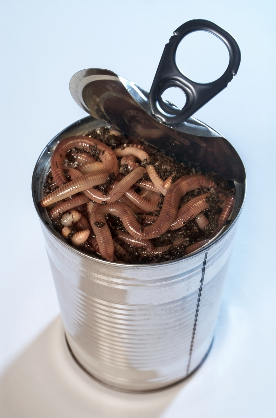 Can of Worms.png