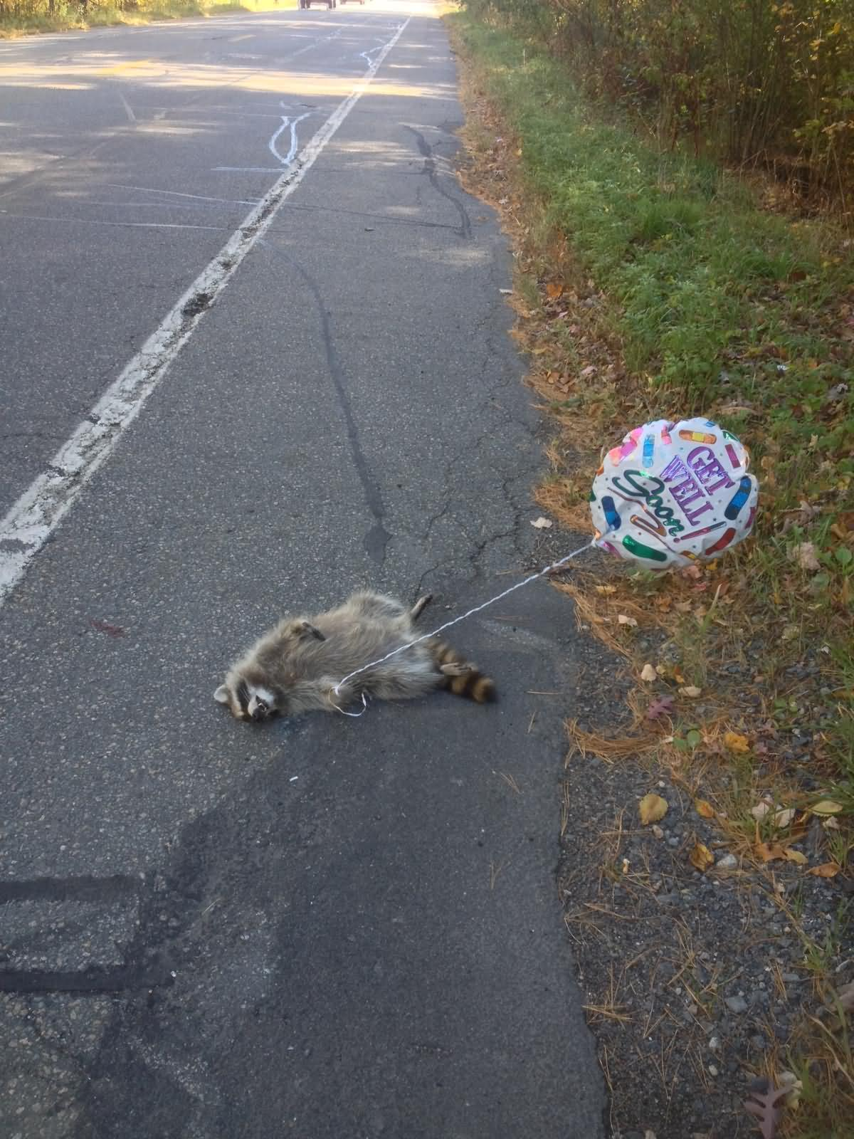 Funny-Raccoon-Road-Kill-Picture.jpg