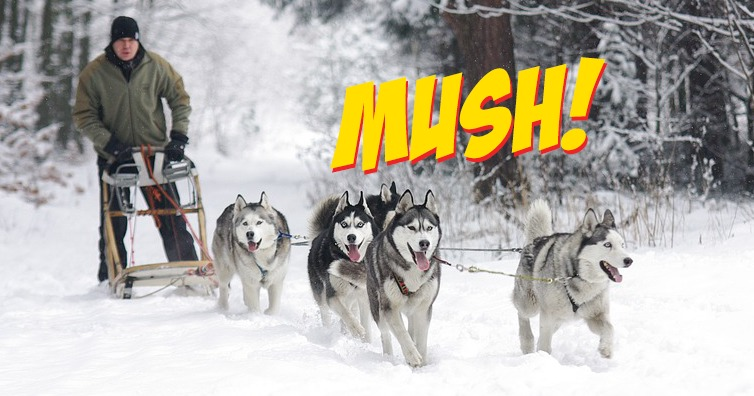 canadiansmushsleddogs.jpg