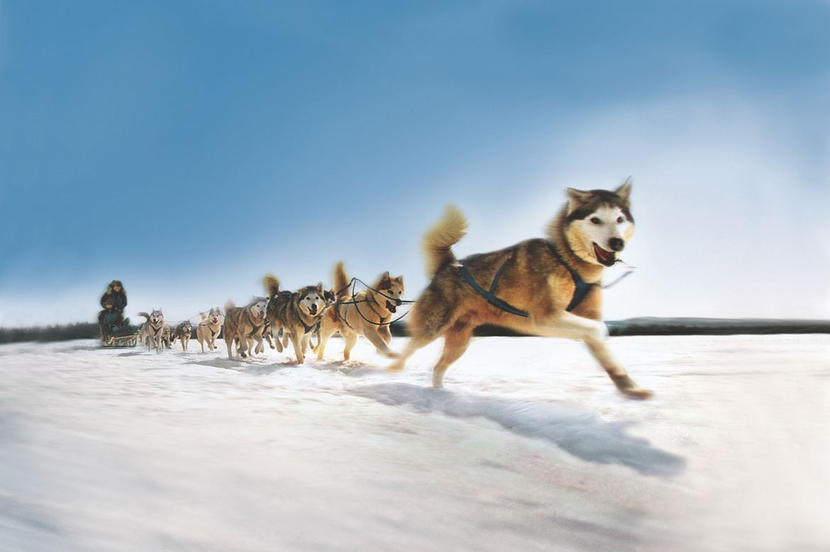 Dog-sled-team.jpg