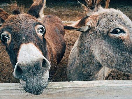 team burro.jpg