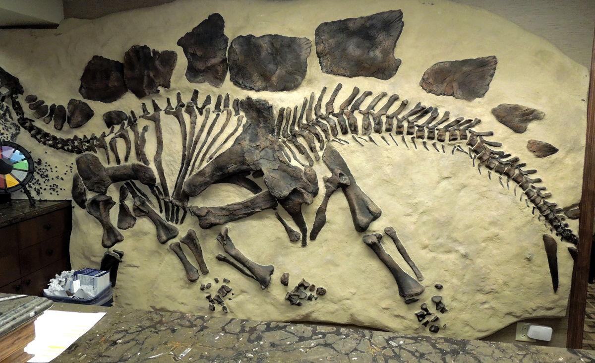 Dino7a.JPG