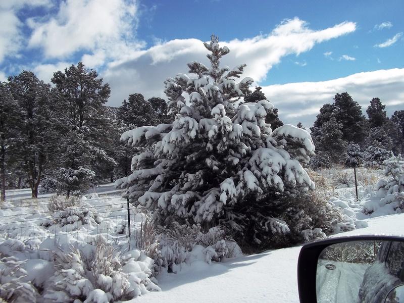 12-14-15 Snow 5.jpg
